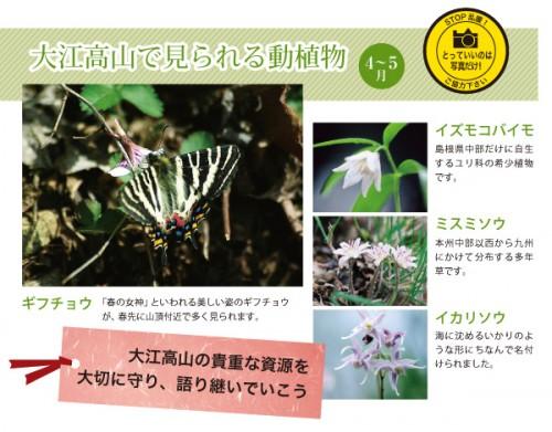 大江高山で見られる動植物
